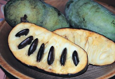 Meet the PawPaw Fruit