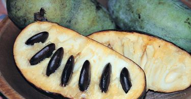 Meet the PawPaw Fruit