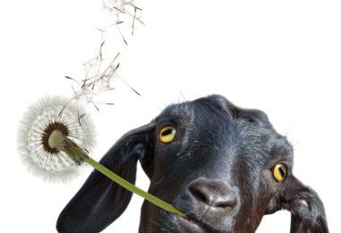 DIY Weed Control: Organic Herbicide Alternatives