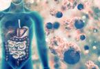 gut flora, gut microbiota, immune system